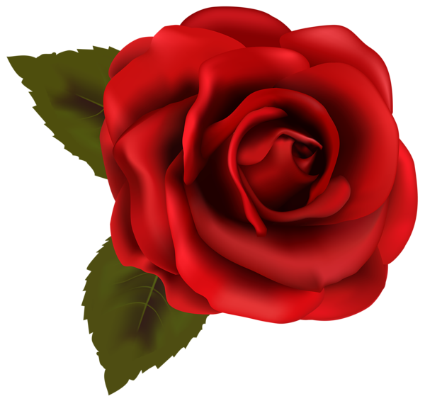 600x566 Beautiful Red Rose Transparent Png Clip Art Image Things To Wear