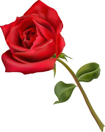 The best free Rose flower clipart images  Download from 4344