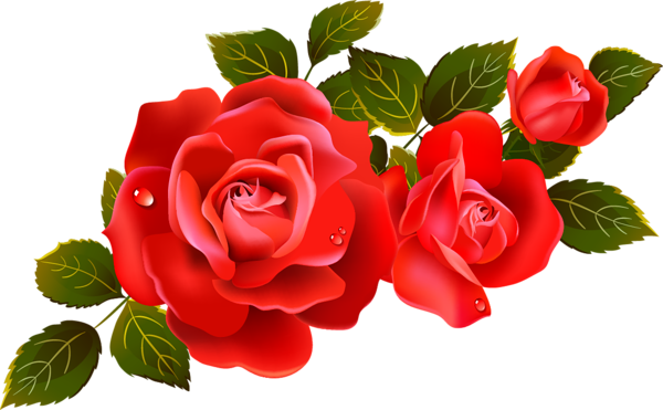 600x371 Single Rose Clipart Large Red Roses Clipart Element Flowers