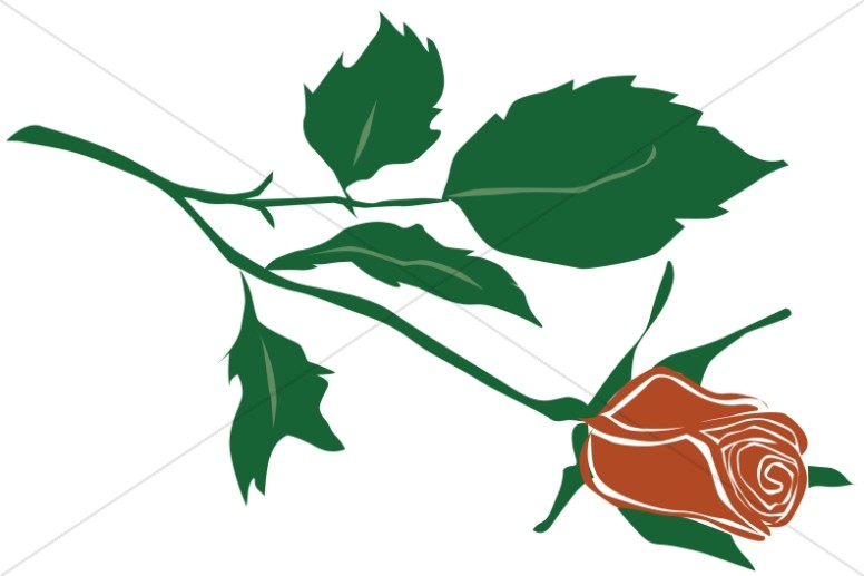 776x517 Church Rose Clipart, Rose Of Sharon Clipart