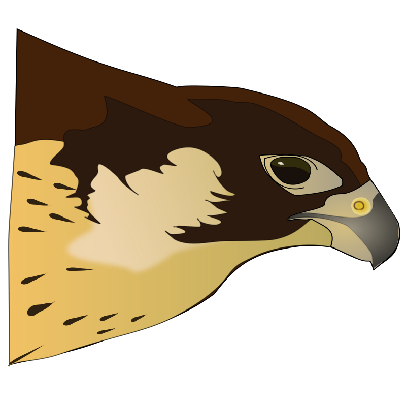 800x793 Hawk Clipart Free Clipart Panda
