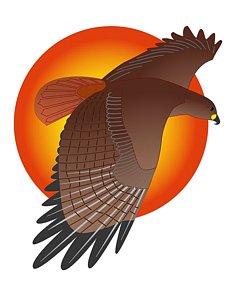235x300 Red Tailed Hawk Drawings Fine Art America