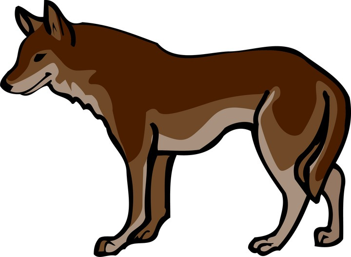 720x527 Mexican Wolf Clipart