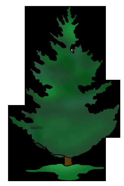 431x648 Douglas Fir Tree Clip Art Cliparts