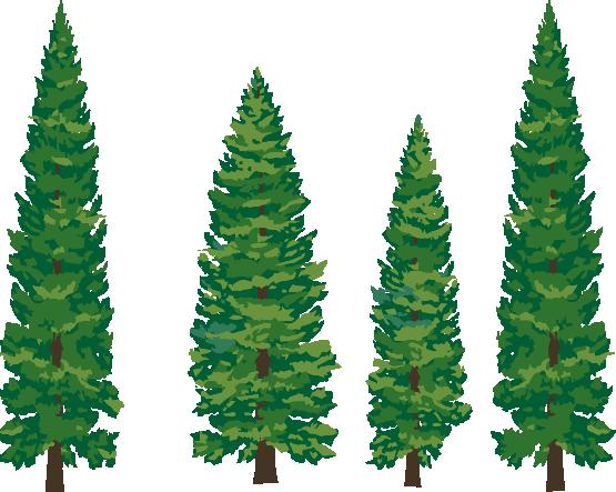 555x443 Pine Tree Clip Art 5 Image
