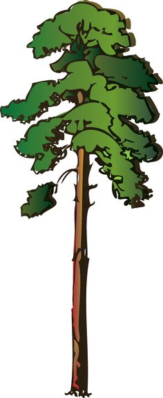 236x576 State Tree Of Oregon