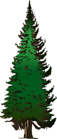 236x575 Best Pine Tree Clipart