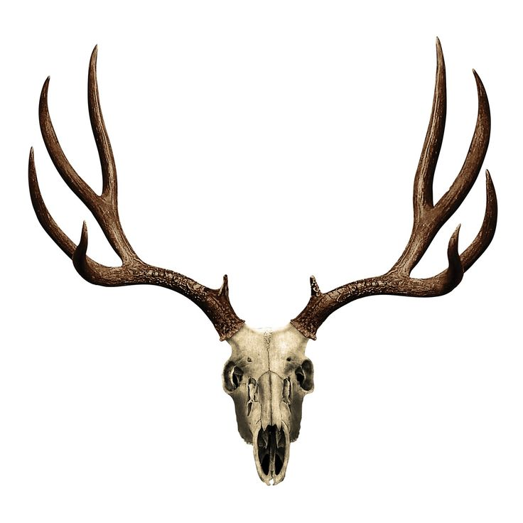 736x736 Buck Clipart Deer Skull
