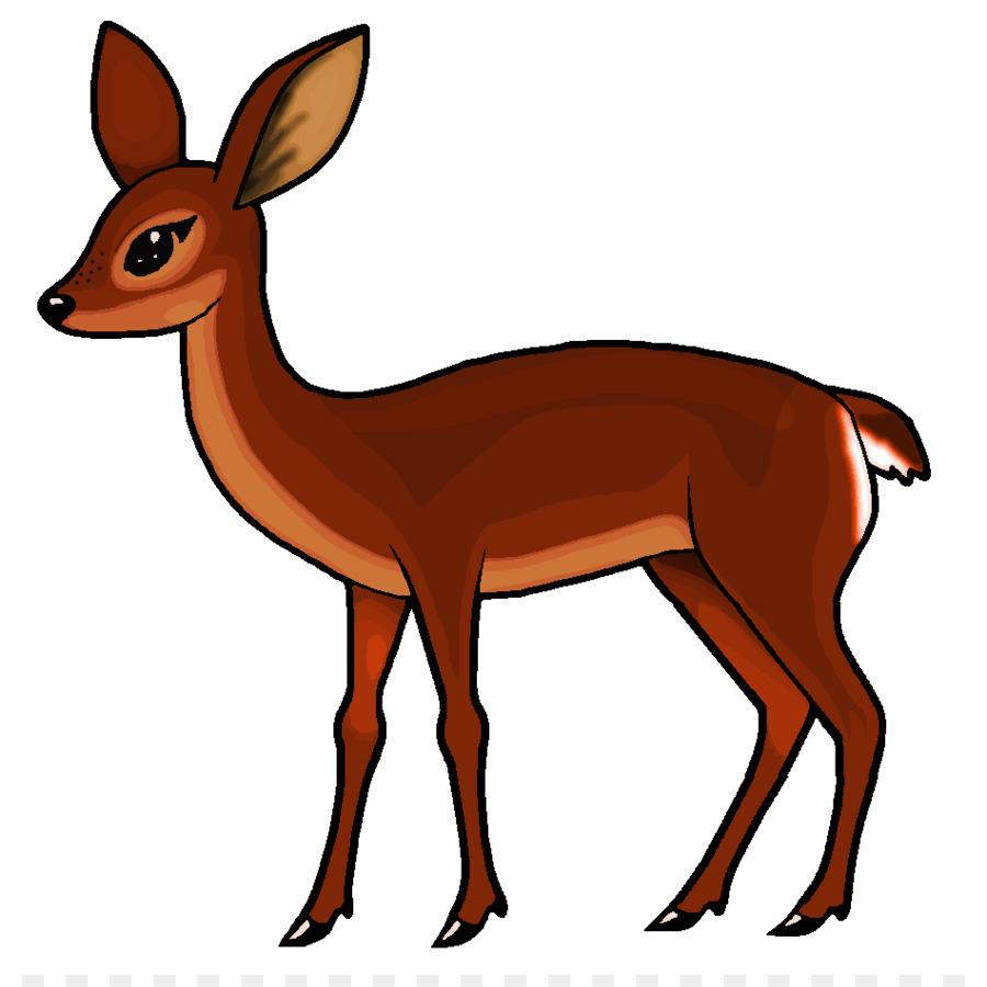 900x900 Roe Deer White Tailed Deer Clip Art