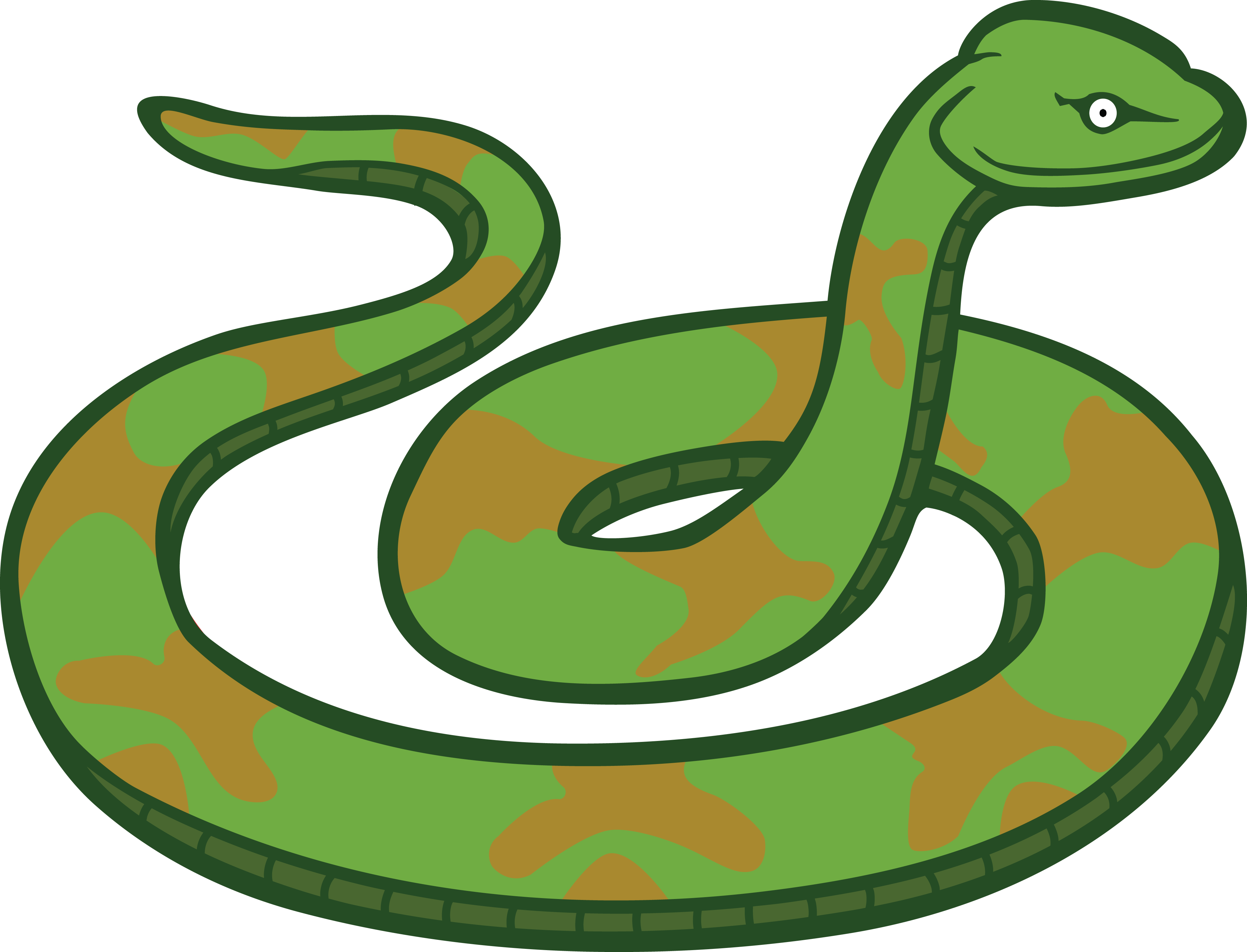 4000x3054 Free Clipart Of A Snake