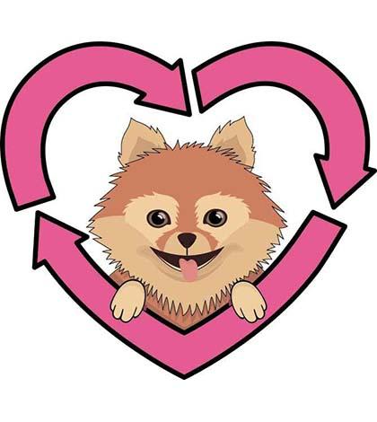 420x470 Pomeranian Clipart Dog Rescue