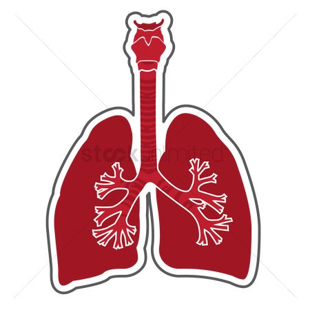 450x450 Free Respiratory System Stock Vectors Stockunlimited