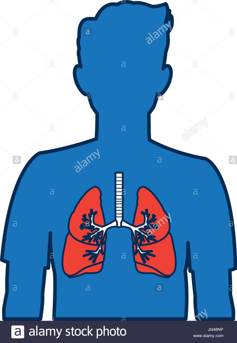 961x1390 Respiratory System Stock Photos Amp Respiratory System Stock Images