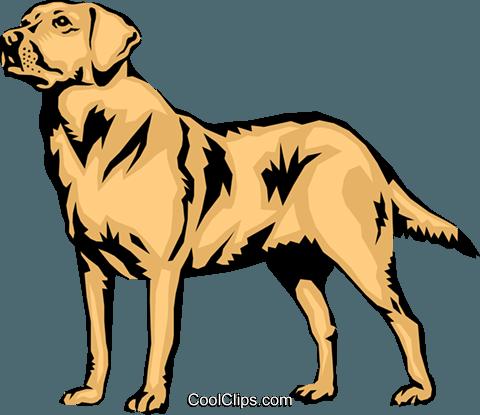 480x415 Labrador Retriever Royalty Free Vector Clip Art Illustration
