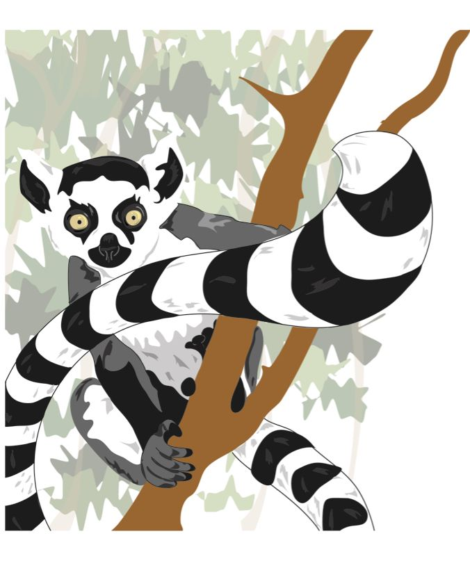 Ring Tailed Lemur Clipart
