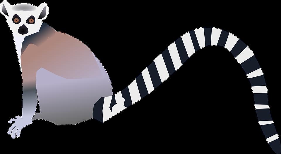960x528 Lemur Clipart Ringtail