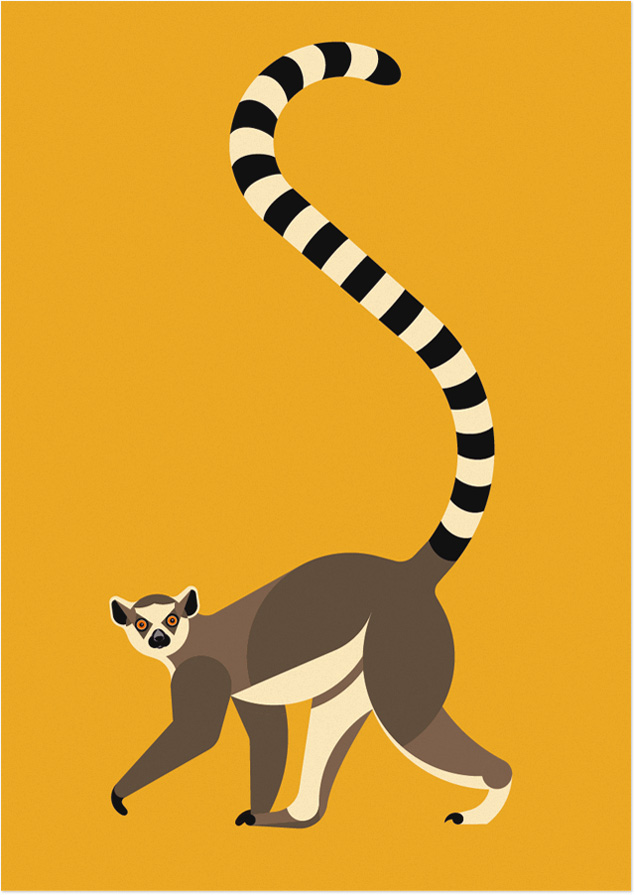 635x895 Ring Tailed Lemur Woutervds
