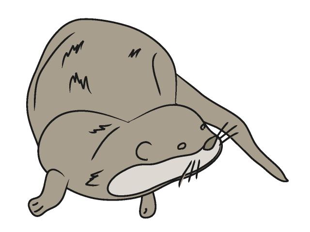 640x480 Otter Clipart