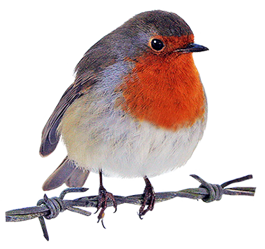 384x360 Robin Clipart Watercolor Robins, Clip Art And Bird