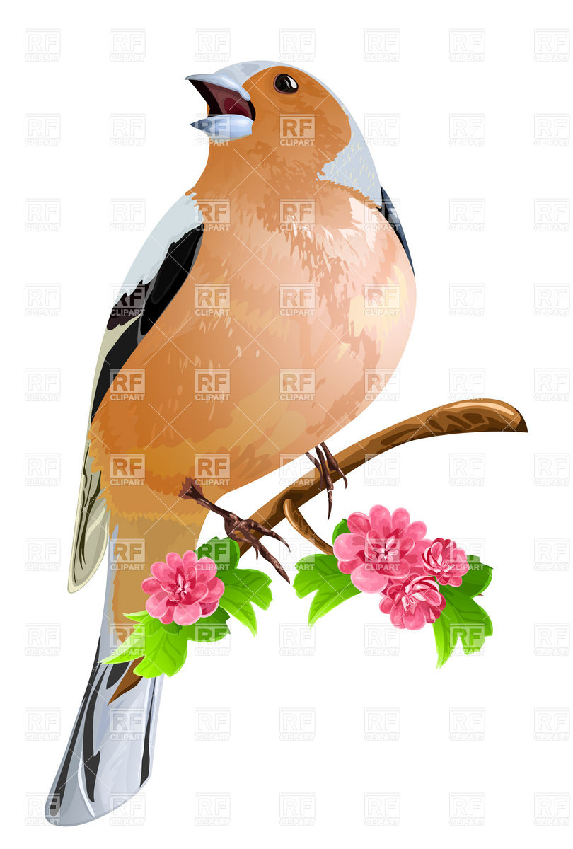 810x1200 Bird (Finch) On The Flowering Branch Royalty Free Vector Clip Art