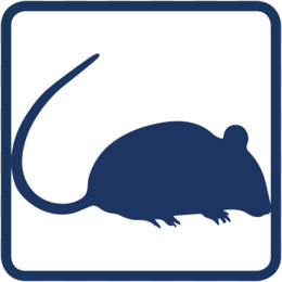 260x260 Computer Mouse Computer Icons Rodent Clip Art