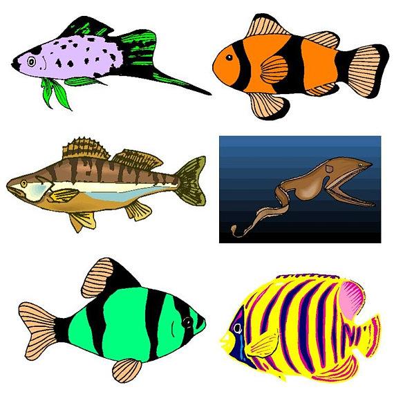 570x570 Sea Animal Clipartsea Animals Clipart Fi Glsea Creatures