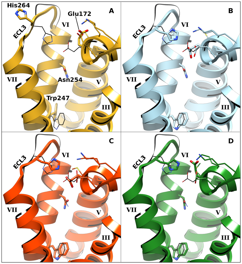 850x927 The Four A1ar Models Used In This Study. Helices Are Labeled