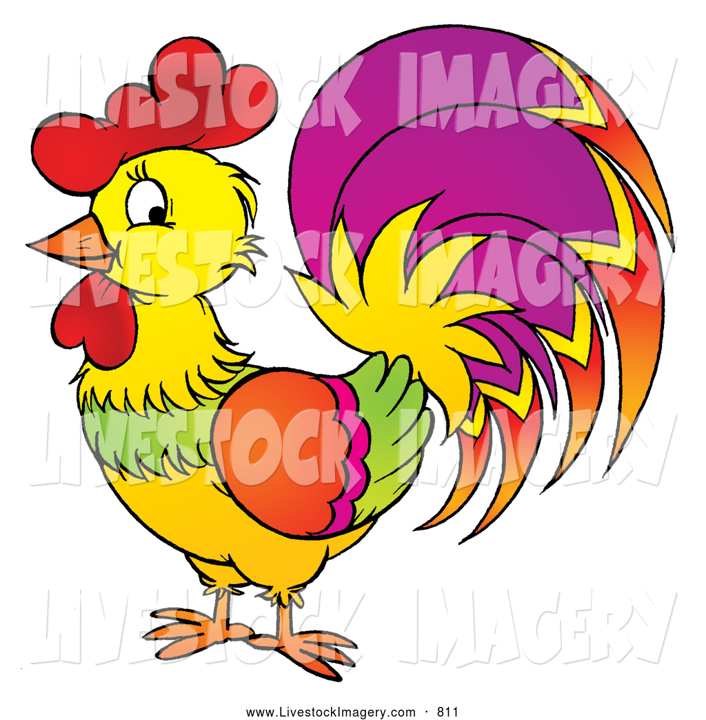 1024x1044 Royalty Free Rooster Stock Livestock Designs
