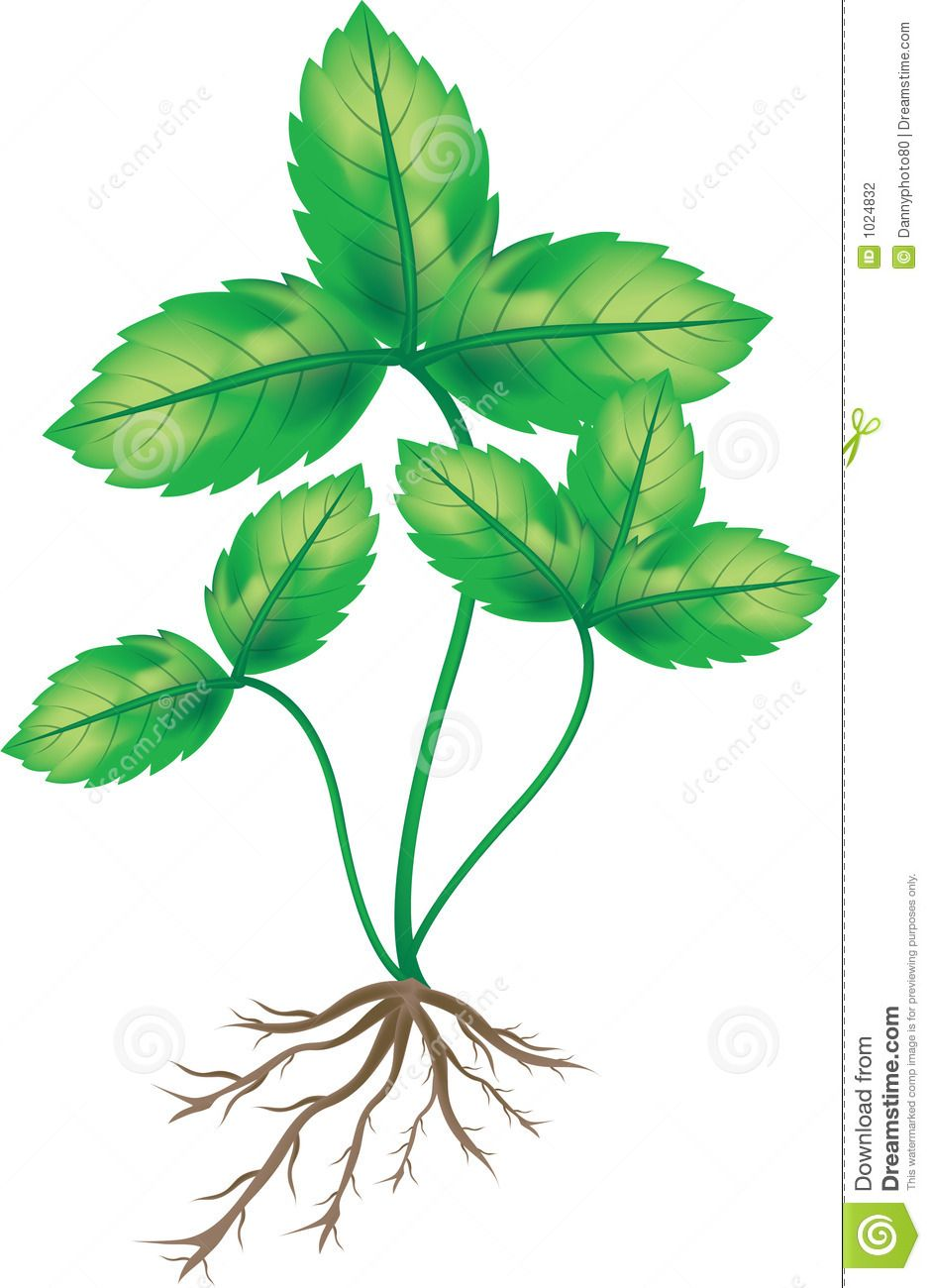 940x1300 Plant With Roots Clip Art Plant With Roo Roots Roots