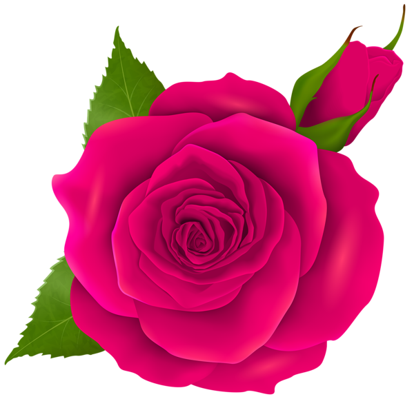 600x579 Pink Rose And Bud Transparent Png Clip Art Flowers