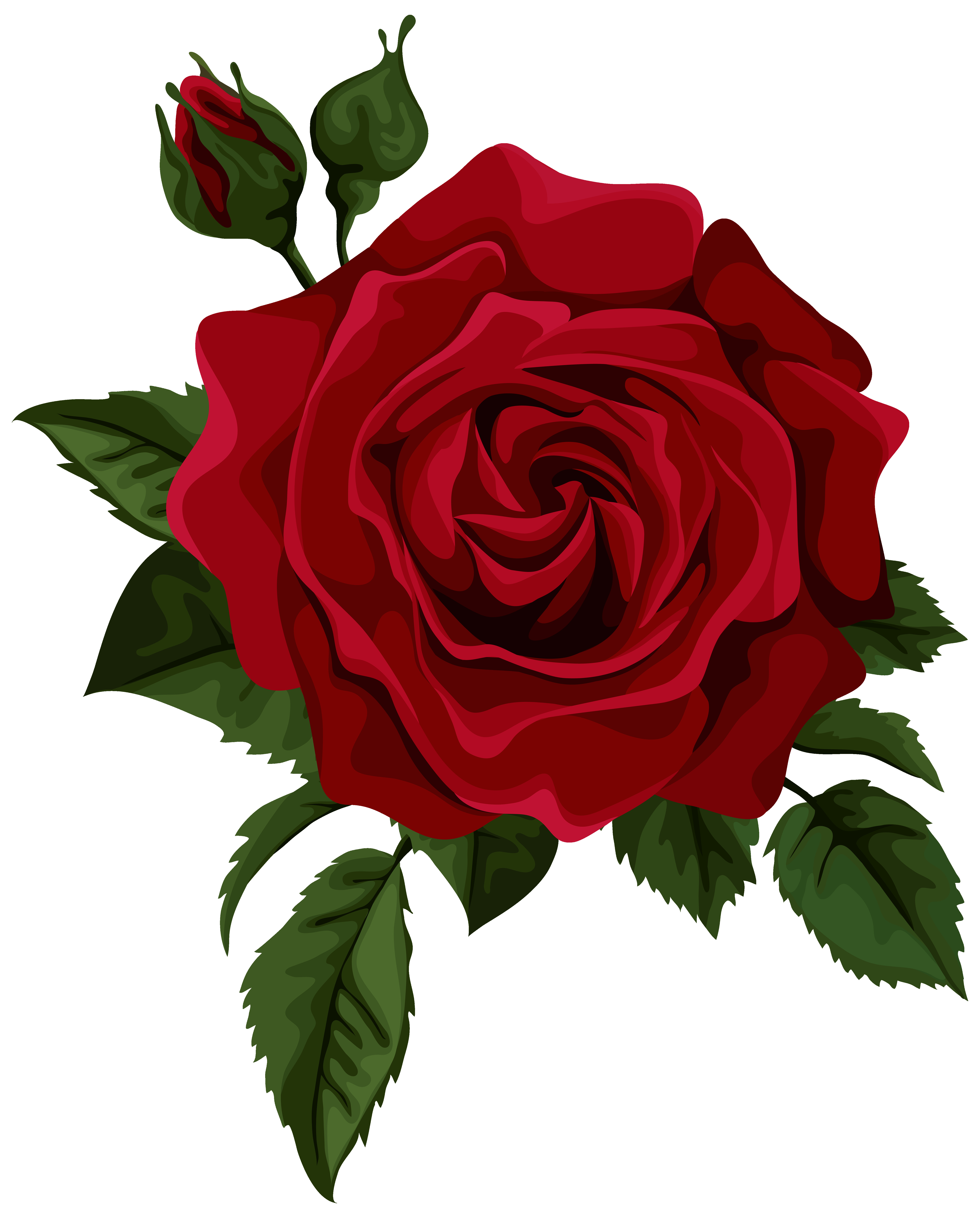 5632x7000 Red Rose With Bud Transparent Png Clip Art Picture Gallery Tearing