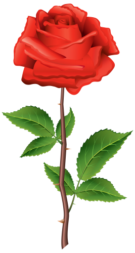267x500 Stem Red Rose Png Clipart Kwiaty Rose, Clip Art