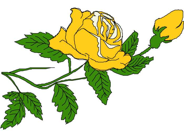 700x505 Yellow Rose Clipart Yellow Rose Bud Art Clipart