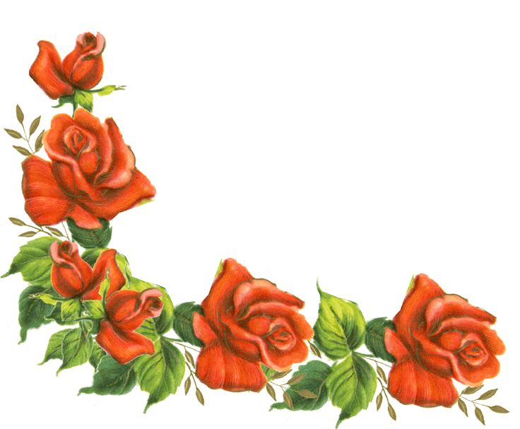 736x607 Rose Borders Backgrounds Clipart