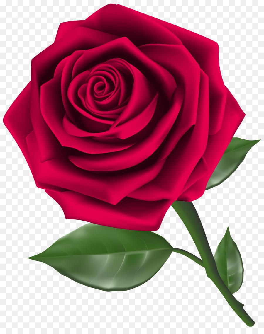 900x1140 Rose Flower Red Clip Art