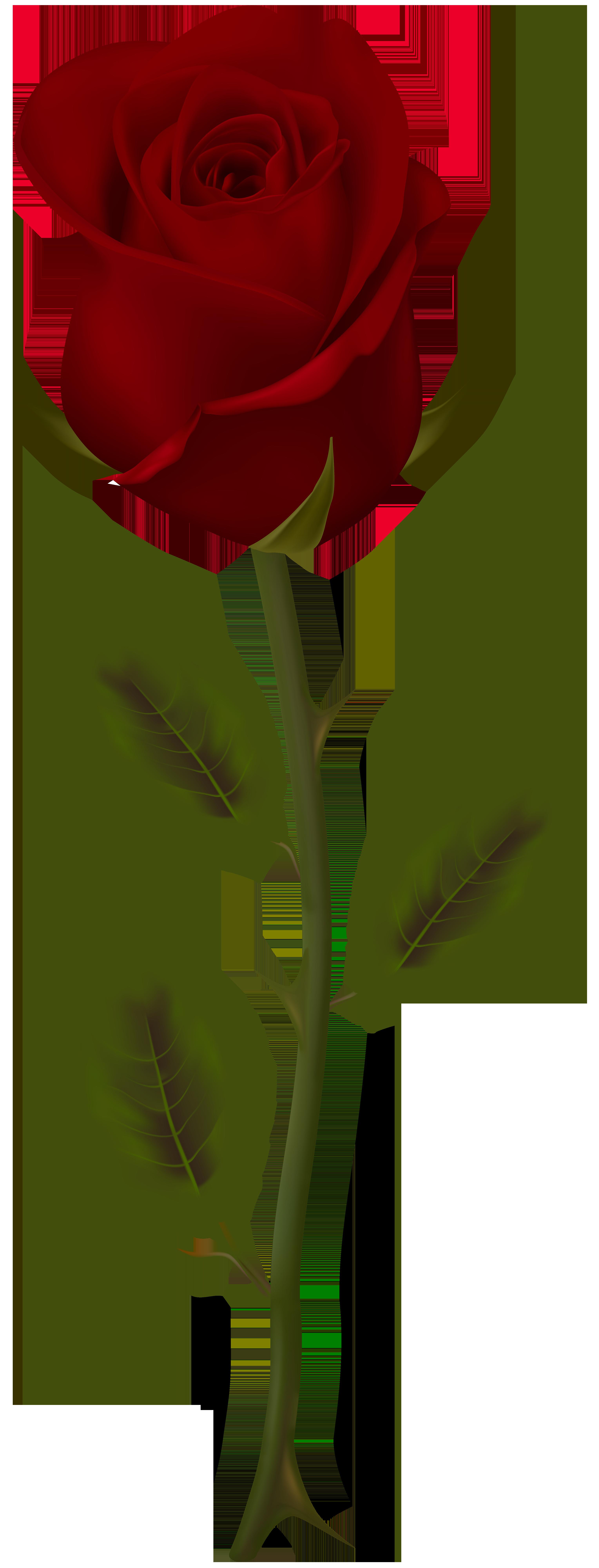 3057x8000 Dark Red Rose Transparent Png Clip Artu200b Gallery Yopriceville
