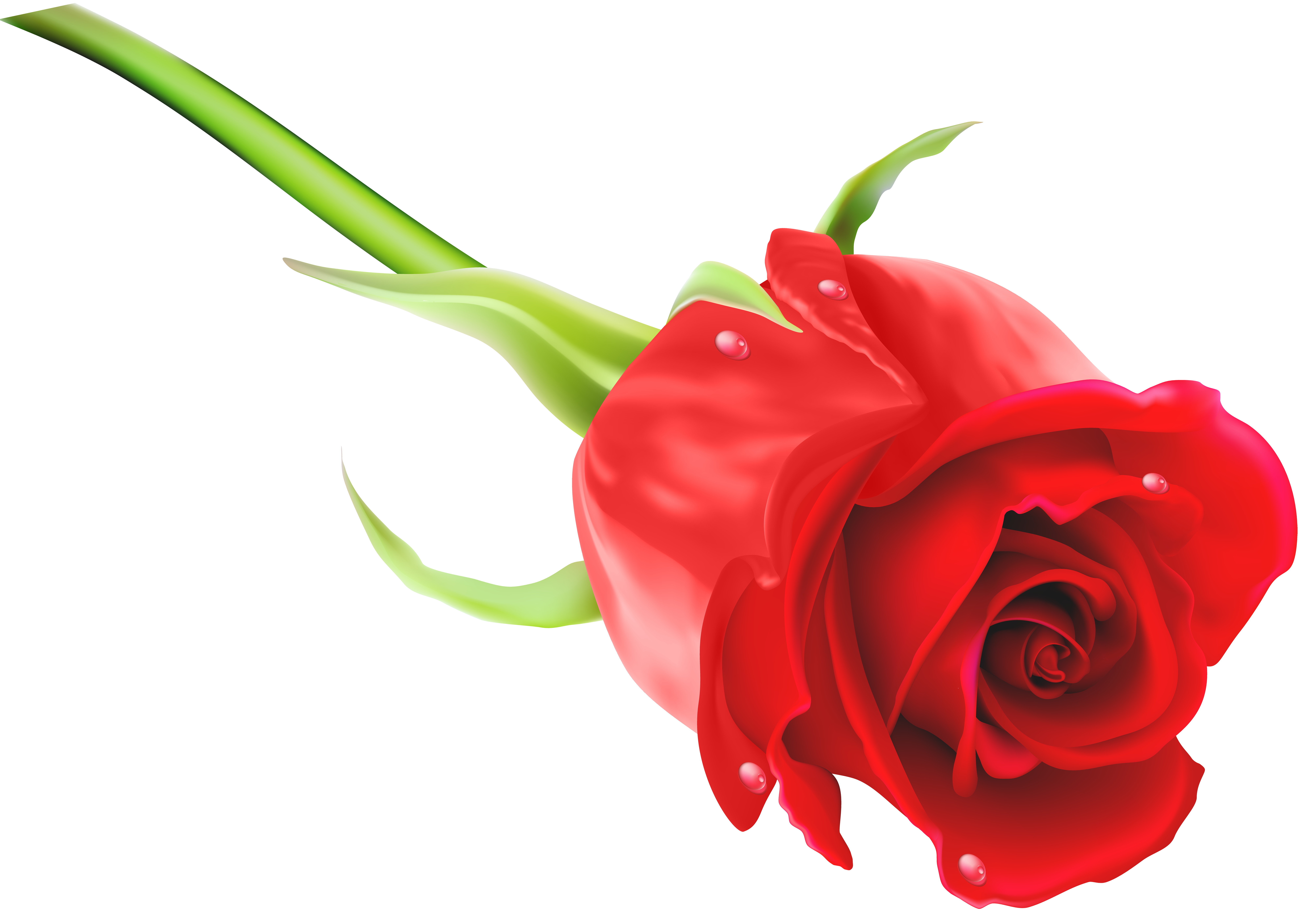 8000x5627 Red Rose Png Clip Art Imageu200b Gallery Yopriceville