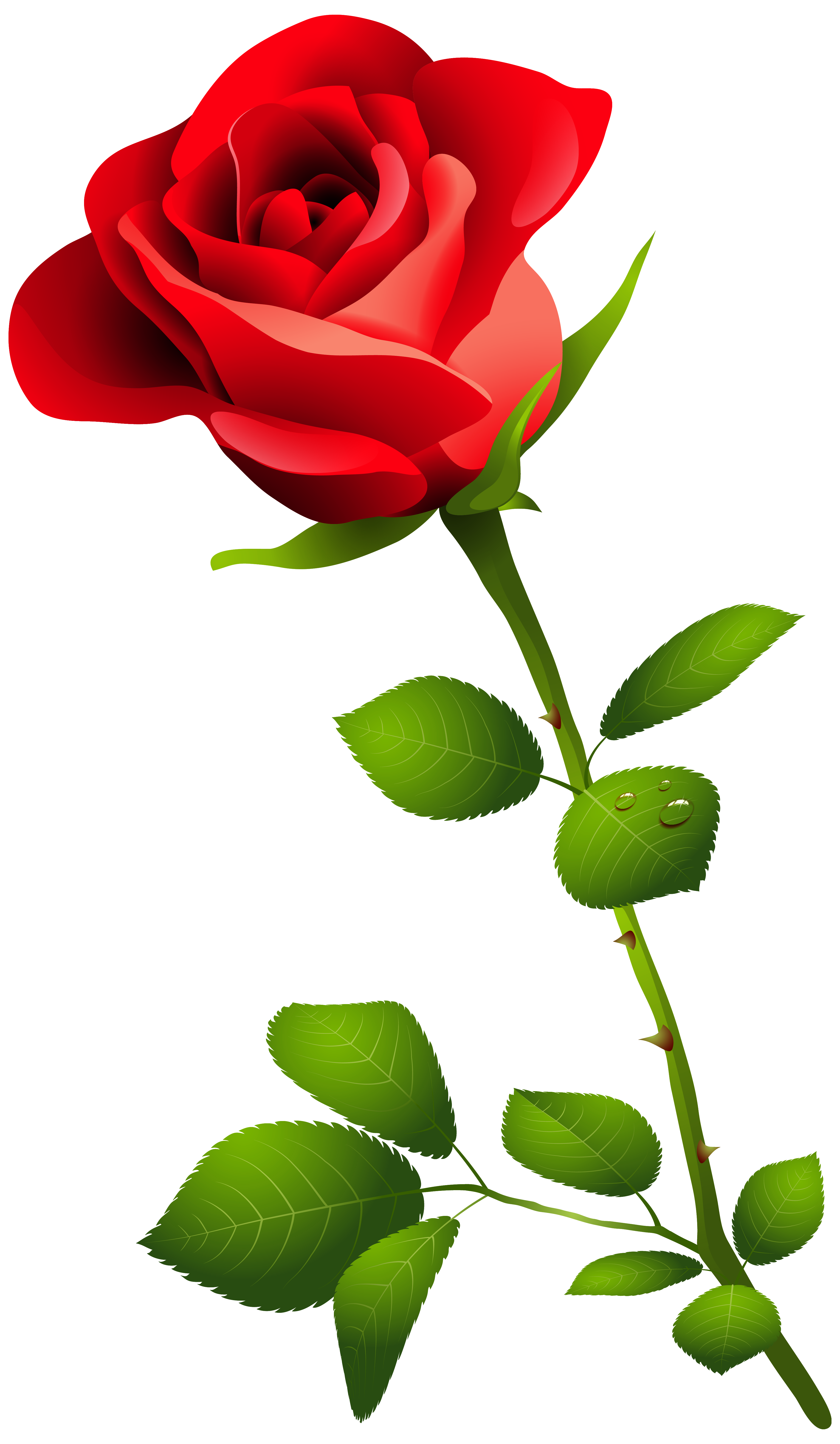 3658x6286 Red Rose With Stem Png Clipart Image Transparent Free Download