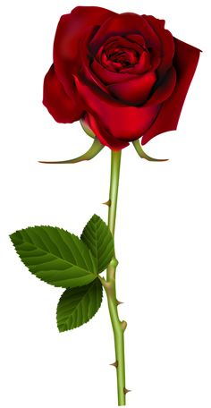 236x456 Rose Pink Transparent Png Clip Art Image Flowers