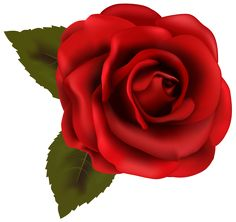 236x222 Single Red Rose Png Clipart Image Roses Single Red