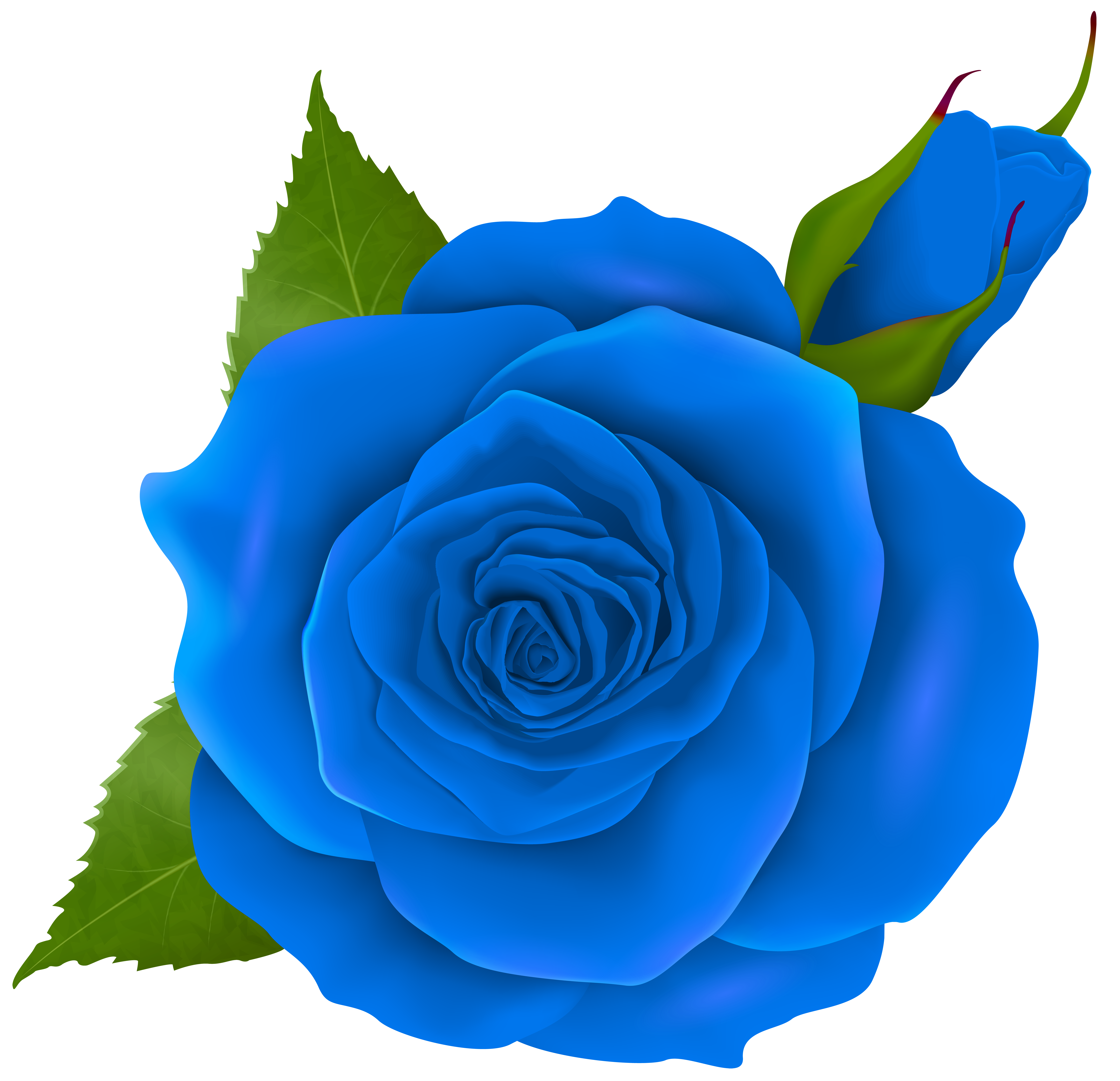 8000x7724 Blue Rose And Bud Transparent Png Clip Artu200b Gallery Yopriceville