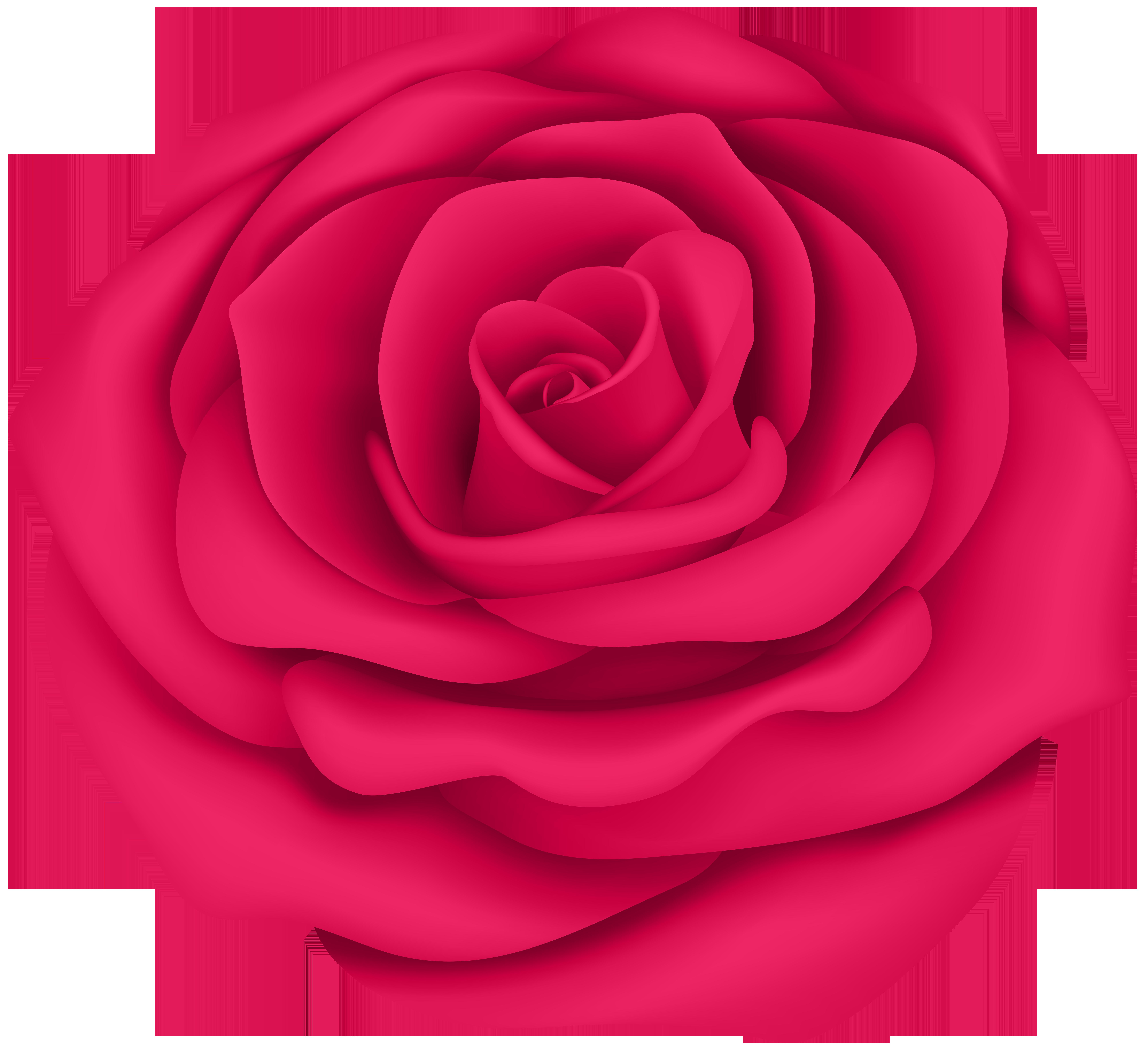 8000x7336 Pink Rose Flower Transparent Clip Art Imageu200b Gallery