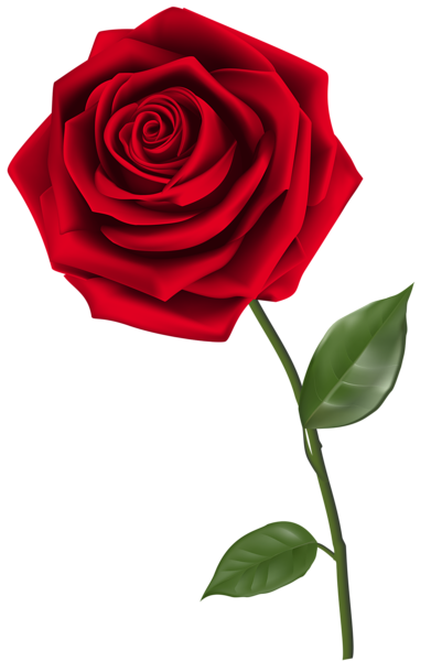 391x600 Single Red Rose Png Clipart Image Single Red