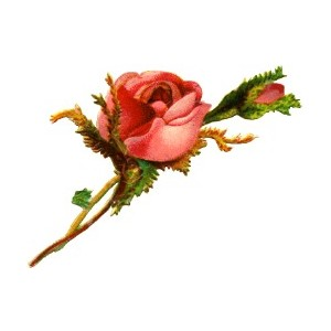 300x300 Old World Roses Clipart