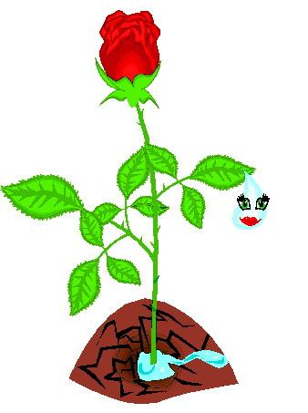 338x453 Rose Plant Clipart