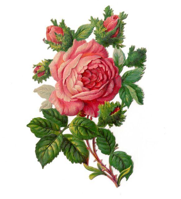 583x640 Vintage Clip Art Rose Dover Image Vintage Clip