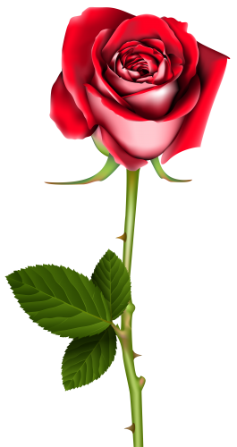 265x500 Rose Png Clip Art Curiosidades Clip Art, Rose