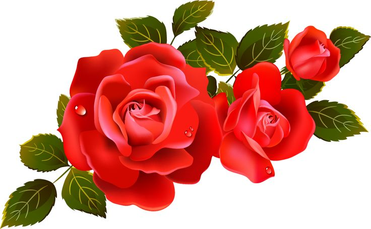736x455 Roses On Red Roses Clip Art And Yellow Roses