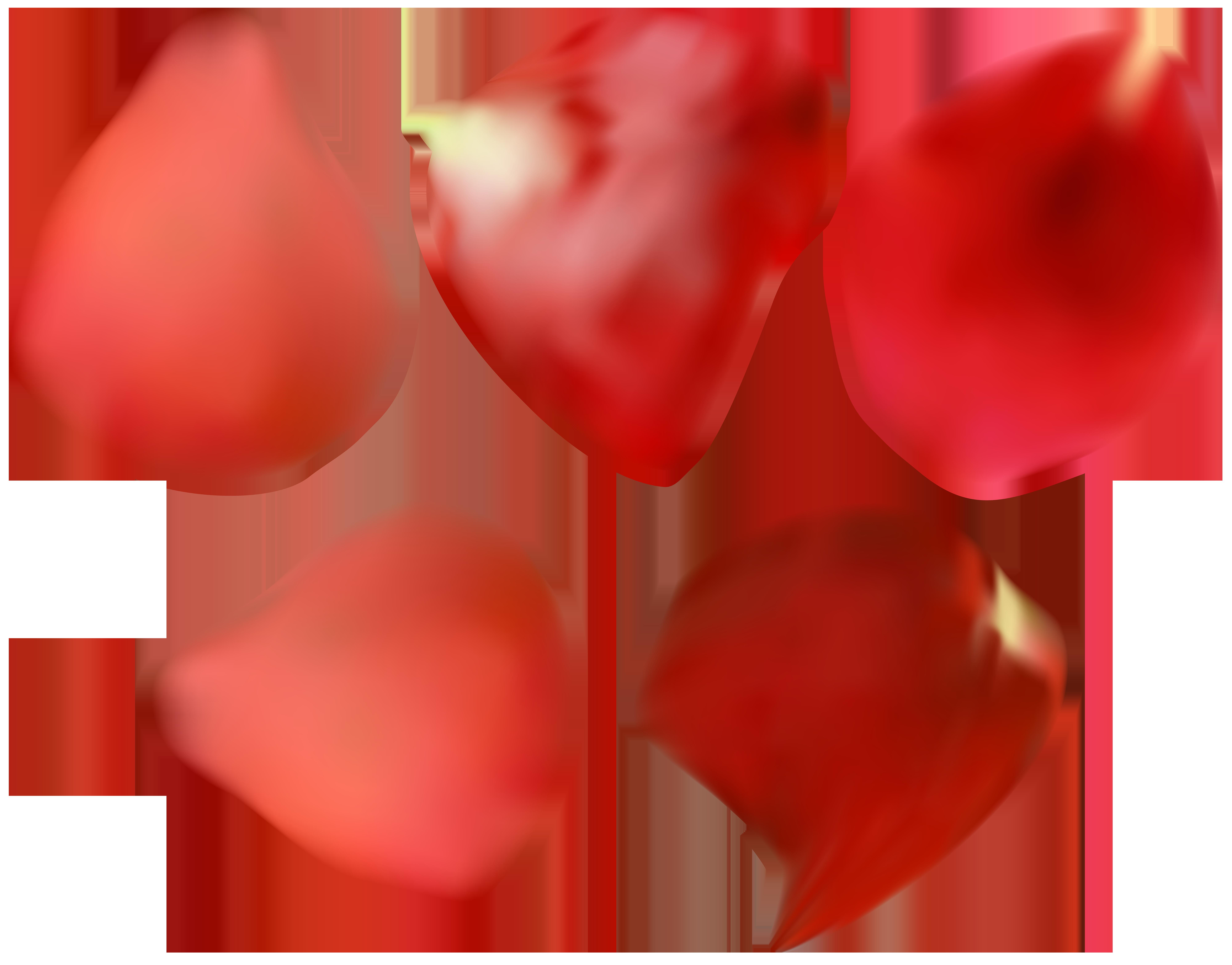 8000x6269 Petal Rose Flower Clip Art