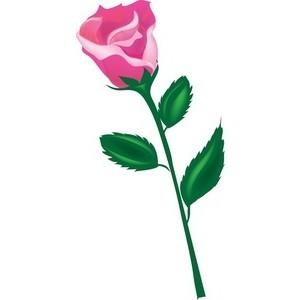 300x300 Petal Clipart Rose Stem